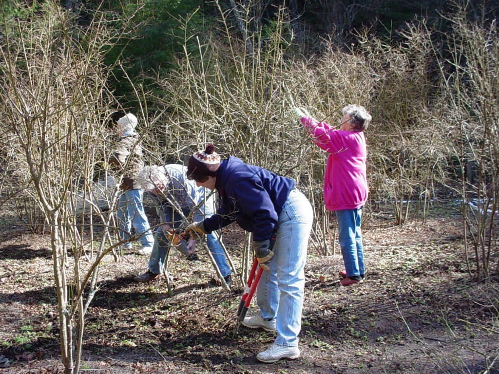 Volunteers Pruning Bushes